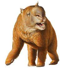 Espèce de Primates : la mégafaune d'Australie
