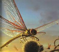Espèce de primates : les insectes géants du carbonifère