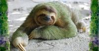 Espèce de primates : la paresse (rediffusion)